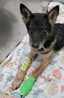 wounded victim Ax K9